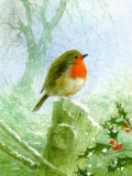 Robin & Holly Christmas Cards - Pack of 10