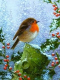 Winter Robin Christmas Cards - Pack of 10